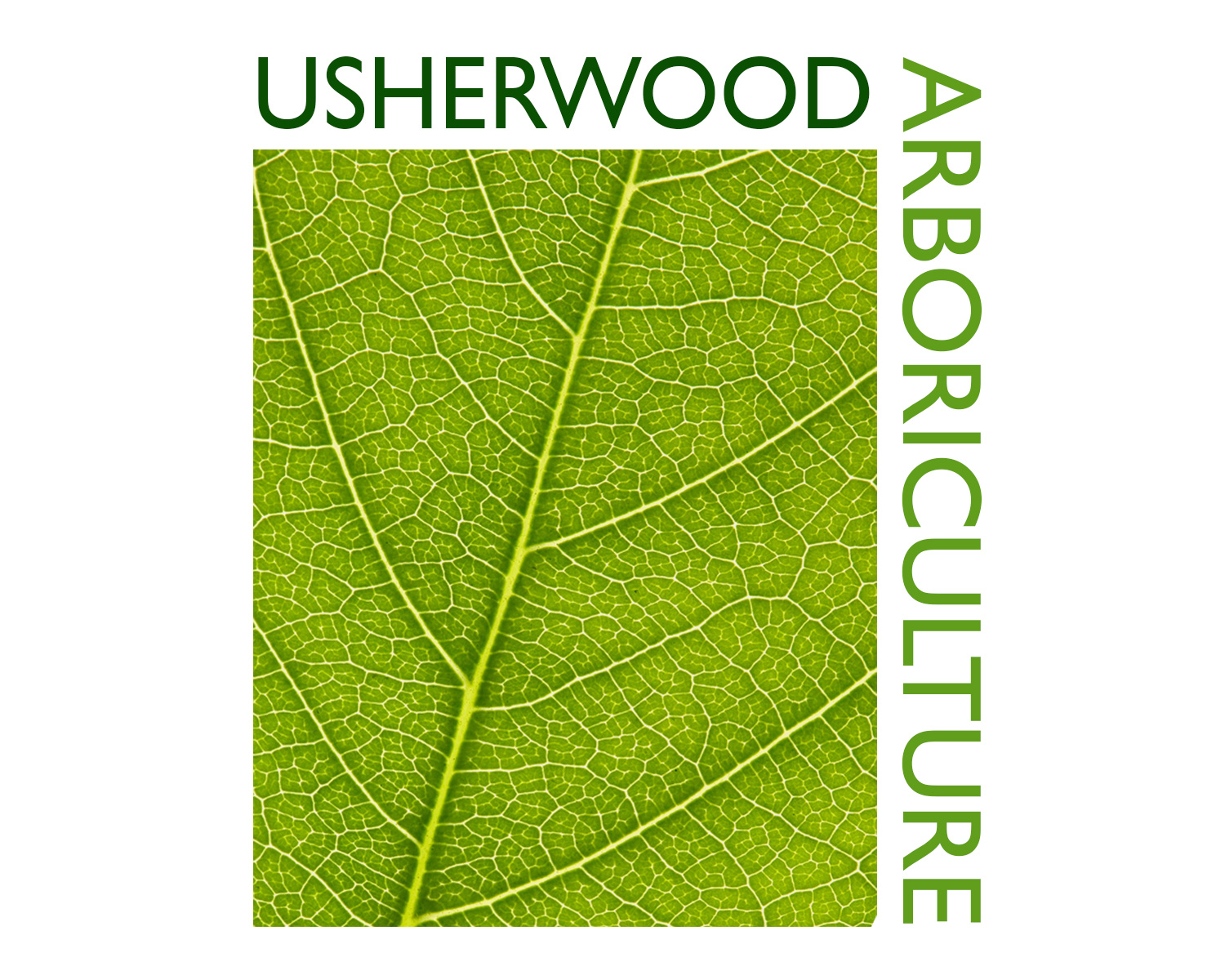Caterham-Branding-Logo-Design-for-Usherwood-Arboriculture
